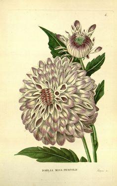 v.5 (1836-1837) - Annales de flore et de pomone : - Biodiversity Heritage Library