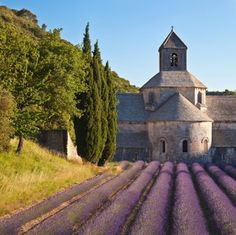 From June until August join one of the lavender tours starting in Aix en Provence to visit the blooming lavender fields ! Three different tours to the lavender fields ! Provence Lavender, Aix En Provence, Provence France, Valensole, Tour Tickets, Lavender Fields, Samos, Group Tours, Travel Tours