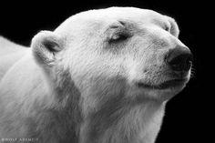 Une sélection des incroyables portraits animaliers du photographe allemandWolf Ademeit, qui capture avec une énergie rare ces animaux et leurs expressions.