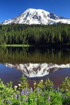 Photograph - Mount Rainier Reflection Lake Wildflowers by Pierre Leclerc Photography , Places To Travel, Places To Go, Mount Rainier National Park, Free Travel, Travel Log, Nature Pictures, Pacific Northwest, Dream Vacations, The Great Outdoors