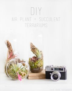 Chloe Moore Photography // The Blog: Air Plant + Succulent Terrarium DIY