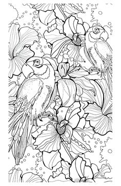 Free coloring page «coloring-adult-difficult-parrots».
