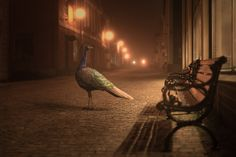 Night Animals, by Mikko Lagerstedt