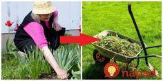 Moja suseda je vášnivou zberateľkou najrôznejších domácich receptov do bytu aj záhrady a keďže každý jeden tip aj sama skúša, presne vie, čo funguje a čo môže odporučiť. Garden Tools, Planters, Gardening, Ideas, Garden Cottage, Yard Tools, Lawn And Garden, Plant, Window Boxes