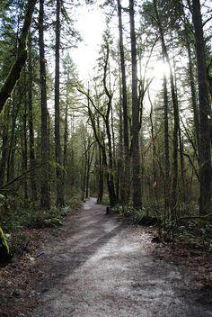 hiking trail in tryon creek state park, portland, oregon