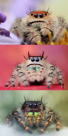 Photographer Igor Siwanowicz makes spiders look cute.