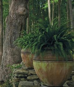 Aged terra cotta with ferns