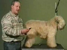 How to Use Grooming Implements - Soft Coated Wheaten Terrier