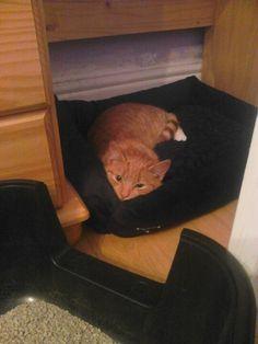 Re-named him Momo! :-D so sleepy kitty