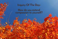 How do you extend compassion to yourself? http://www.iotd365.com/blog/2016/11/5/how-do-you-extend-compassion-to-yourself