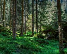Dnes je Svetový deň lesov  - vyhlásili ho v roku 1971 Európska poľnohospodárska konfederácia (ECA) a Organizácia Spojených národov pre výživu a poľnohospodárstvo (FAO).