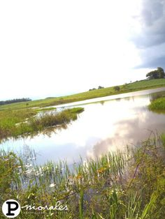 Lagoon  #lagoon #laguna #reflecting #sky #swimming #naked #nature #floral #flowers #fishing