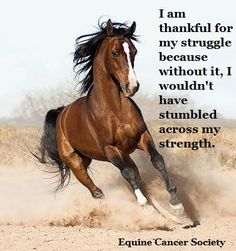 I am thankful for my struggles... I am thankful for my strength.