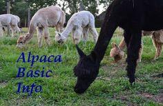Alpaca Basic Information