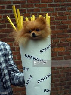 A dog dressed as french fries attends the 25th Annual Tompkins Square Halloween Dog Parade in New York October 24, 2015.          AFP PHOTO / TIMOTHY A. CLARY        (Photo credit should read TIMOTHY A. CLARY/AFP/Getty Images)