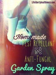 Homemade All-Natural Pest-Repellant and Anti-Fungal Garden Spray! From Life, Liberty, and the Pursuit of Healthiness Organic Gardening, Gardening Tips, Natural Pesticides, Growing Gardens, Homemade Cleaning Products, Natural Garden, Garden Pests, Pest Control, Outdoor Gardens