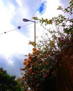 Bugambilias y nubes