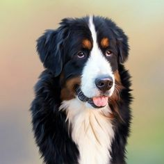 Did you know that most of these dog behaviors are not just instinctive or related to only your dog, but science have explained it through experiments the reason behind their behavior