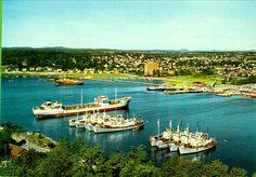 Vestfold fylke Sandefjord havnen med hvalbåter Utg Aune 1960-tallet Whale, Cats, Historia, Whales, Gatos, Cat, Kitty, Kitty Cats