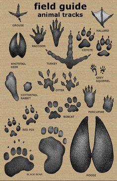 11 x 17 Animal Tracks Field Guide Poster Survival Shelter, Wilderness Survival, Camping Survival, Outdoor Survival, Survival Prepping, Survival Gear, Survival Skills, Emergency Preparedness, Apocalypse Survival