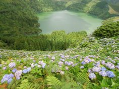"""Flores Island, Azores The island of Flores is the westernmost point of the Azores Archipelago, and of the European continent. It takes its name, literally """"flowers,"""" from its abundance of wildflowers, particularly hydrangeas. It's also noted for tranquil lagoons, cliffs carved by grottoes, hot springs and volcanic remains."""