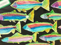 Apex Elementary Art, rainbow trout, third grade watercolor project