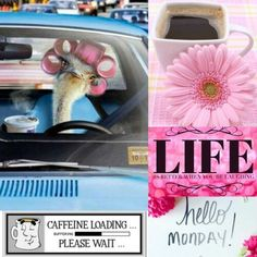 ☮ * ° ♥ ˚ℒℴѵℯ cjf Morning Memes, Good Morning Quotes, Morning Board, Monday Morning, Happy Monday Quotes, Monthly Quotes, Manic Monday, Love Post, Hello Monday