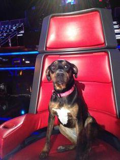 Miranda Lambert and Blake Shelton's Dog Betty! >> http://www.gactv.com/gac/ar_artists_a-z/article/0,3028,GAC_26071_6053227_49,00.html