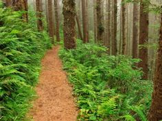 Cape Lookout State Park - Tillamook, Oregon - Old-Growth Forest, Clifftop Views, and Many Trails Battle Ground Lake, State Parks, Rv Parks, Townhouse Garden, Park Trails, Hiking Trails, Oregon Travel, Oregon Vacation, Vacation Spots