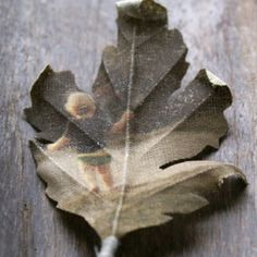 Picture leaf