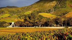 Interesting places to visit in South Africa. Groot Constantia is South Africa's oldest wine producing farm, with there 333rd harvest underway. They are open 7 days a week so you can explore the vineyards, discover the historic Manor House and taste award-wining wine in the original Cloete Cellar.... #wine #southafrica #wineestate #tourism #extremefrontiers #wineroute #adventure #holiday #vacation #vineyard #tourist #travel