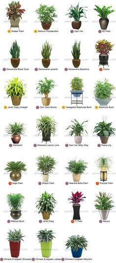 Pequenas plantas tropicais para Interior More