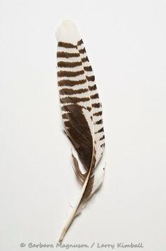 bird feather, detail