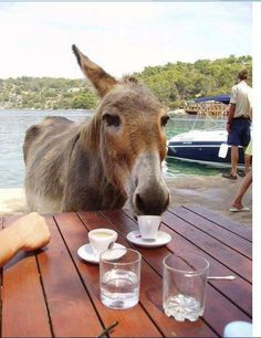Coffee Time on Greek Island! Donkeys at Paphia… – My CMS Donkey Donkey, Baby Donkey, Cute Donkey, All The Pretty Horses, Beautiful Horses, Burritos, Farm Animals, Animals And Pets, Pet Dogs