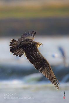 Osprey by Ahn . Birds 2, Birds Of Prey, Great Photos, Bald Eagle, Cute Animals, Seoul Korea, Canon Eos, Don't Forget, Nature