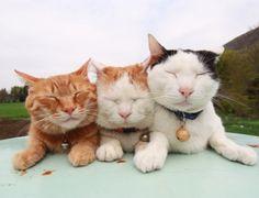 Nite-Nite, Pinterest!!  Now someone please turn off the sun, k thanks!