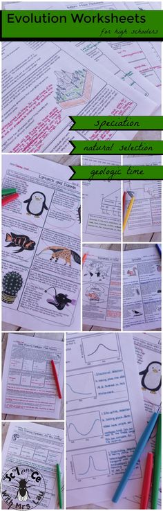 A unique set of homework pages for evolution that cover speciation, Darwin and Lamarck, adaptations, types of natural selection, gene flow, and Hardy Weinberg!