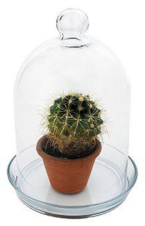 Glass Bell Jar Terrarium I