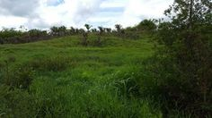 AGRICULTURAL LAND FOR SALE TRINIDAD AND TOBAGO | www.Fair Deal Real Estate.net