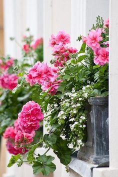 I love geraniums, both the zonal and the trailing ivy. They are always in bloom and so happy.Window boxes with Geranium (Pelargonium) and Bacopa Container Plants, Container Gardening, Succulent Containers, Container Flowers, Pink Geranium, Geranium Flower, Pot Jardin, Decoration Plante, Garden Windows