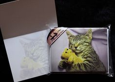 Note Cards, Sleeping Daisy the Kitty Cat Kitten & Teddybear Fine Art Photography Cards w/ Envelopes - pinned by pin4etsy.com