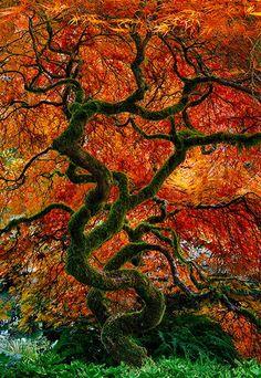 Infinity Tree  -by Peter Lik