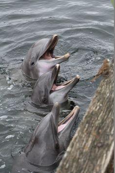 Dolfijnen in Dolfinarium Harderwijk