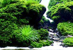 Aquarium Aquascape, Planted Aquarium, Aquascaping Plants, Aquarium Garden, Freshwater Aquarium Plants, Aquarium Landscape, Tropical Freshwater Fish, Tropical Fish Aquarium, Aquarium Setup