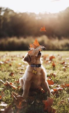 Golden Retriever Puppies A Hound Dog — Happy November! Animals And Pets, Baby Animals, Funny Animals, Cute Animals, Cute Puppies, Cute Dogs, Dogs And Puppies, Doggies, Funny Dogs