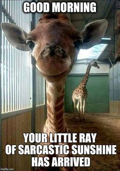 20 Good Morning Funny Pictures