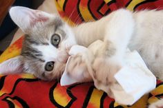 死ぬ程可愛い猫画像スレ(=^ェ^=):哲学ニュースnwk