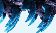 Limpet teeth found to be strongest natural material