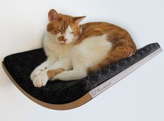 Curve – A Modern Wall-Mounted Pet Bed by Akemi Tanaka