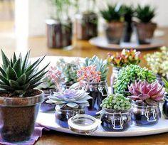 Plantas que llenarán tu hogar de Feng Shui